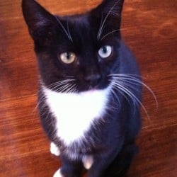 Lost Black & White Cat Bentleigh East Area