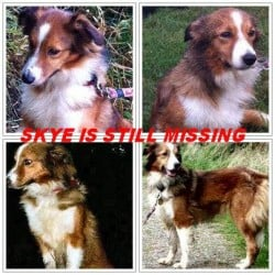 Border collie lost in Monreith,Scotland since 22nd Oct 2013