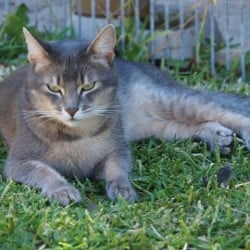LOST CAT – MT PLEASANT (NEAR FISH AND CHIP SHOP)