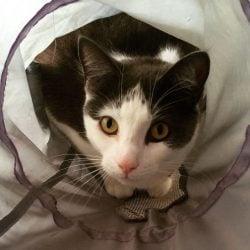 Disco Lost Cat Fitzroy VIC REUNITED