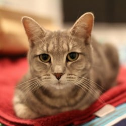 Godiva is missing from Vic Park, WA