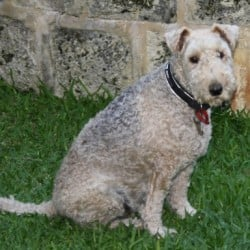 Lost Dog Terrier