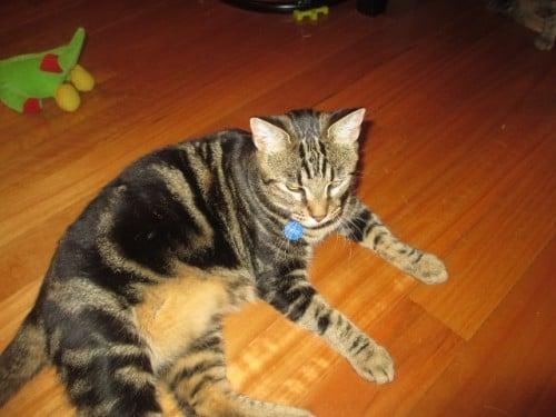 cat keeps peeing on furniture