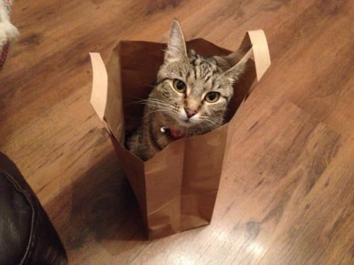 Esther in bag