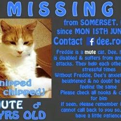 Freddie missing