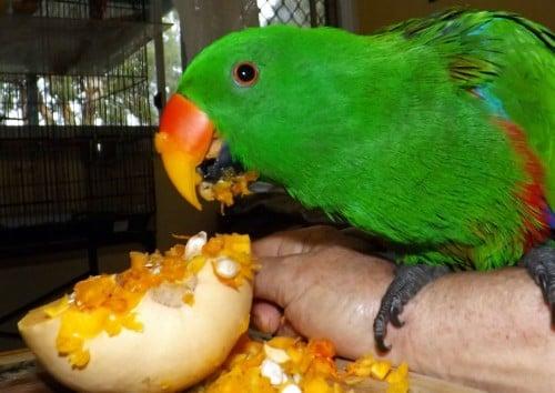 Georgie Parrot Umina Reunited eating
