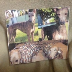 Lost Blue Brindle Greyhound Penrith Orchard Hills Collage