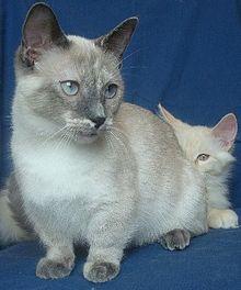 LITTLE CAT VERRY FINE