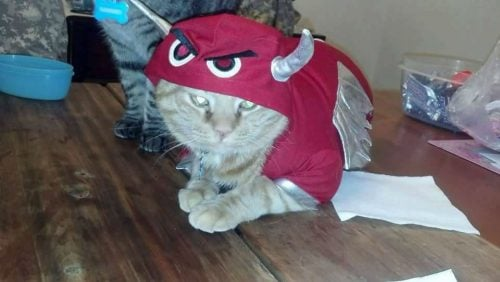 Buddy Lost Cat Alexandria VA USA devil shot